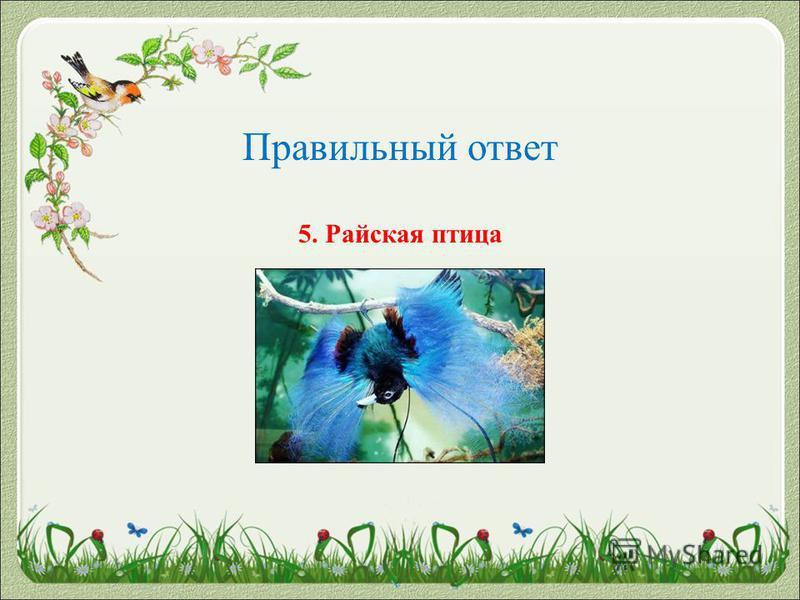 Правильный ответ 5. Райская птица