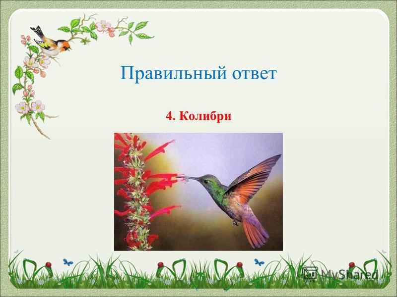 Правильный ответ 4. Колибри