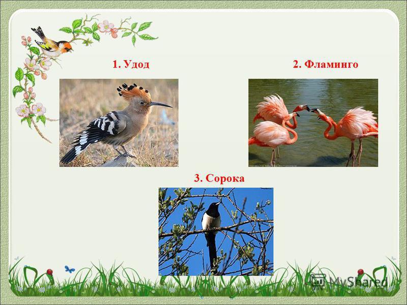 1. Удод 2. Фламинго 3. Сорока