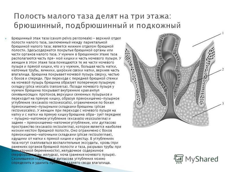 Брюшинный этаж таза (cavum pelvis peritoneale) - верхний отдел полости малого таза, заключенный между париетальной брюшиной малого таза; является нижним отделом брюшной полости. Здесьсодержатся покрытые брюшиной органы или части органов малого таза.