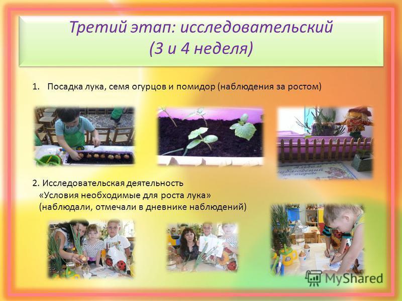 Третий этап: исследовательский (3 и 4 неделя) 1. Посадка лука, семя огурцов и помидор (наблюдения за ростом) 2. Исследовательская деятельность «Условия необходимые для роста лука» (наблюдали, отмечали в дневнике наблюдений)