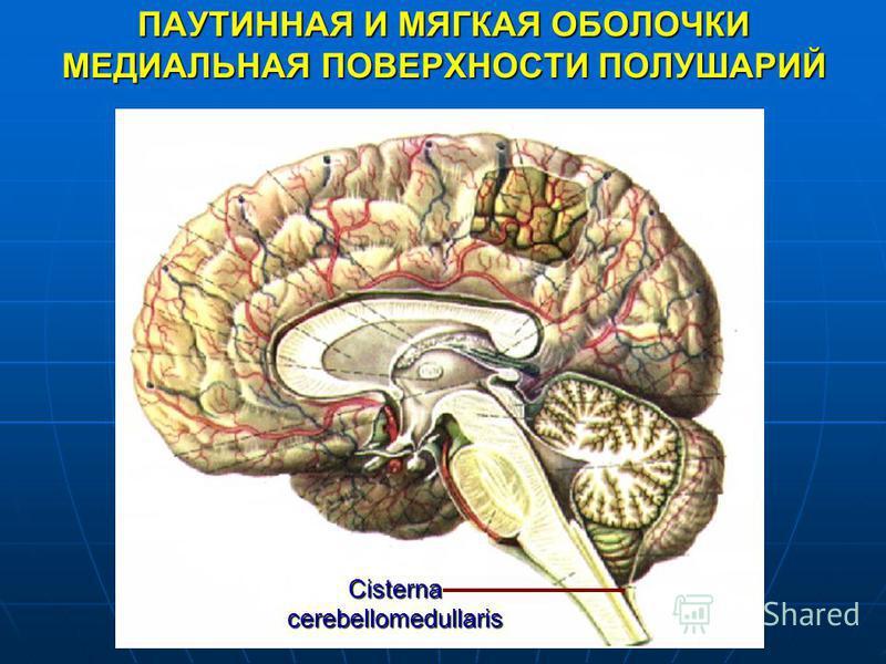 ПАУТИННАЯ И МЯГКАЯ ОБОЛОЧКИ МЕДИАЛЬНАЯ ПОВЕРХНОСТИ ПОЛУШАРИЙ Cisterna cerebellomedullaris