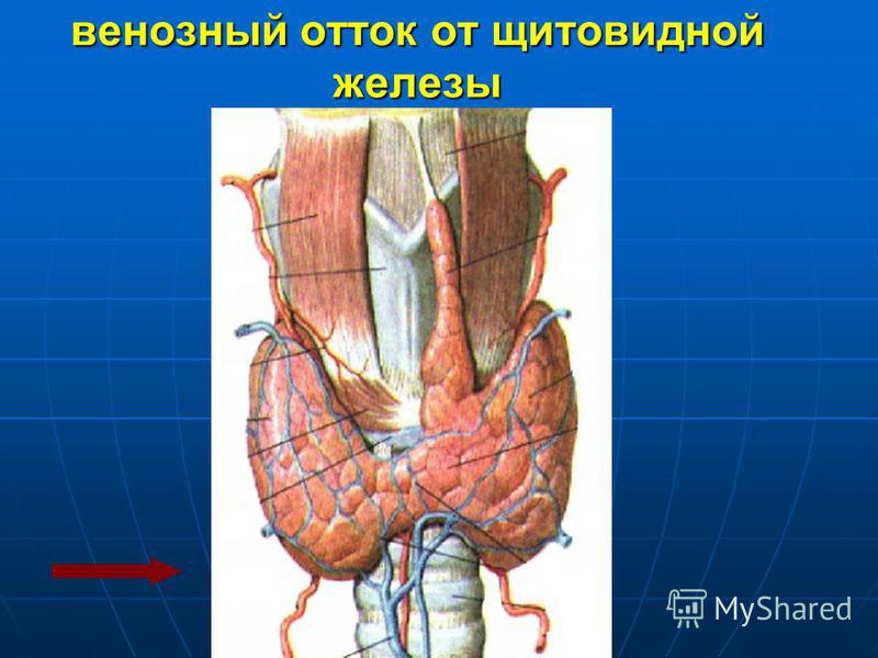 венозный отток от щитовидной железы