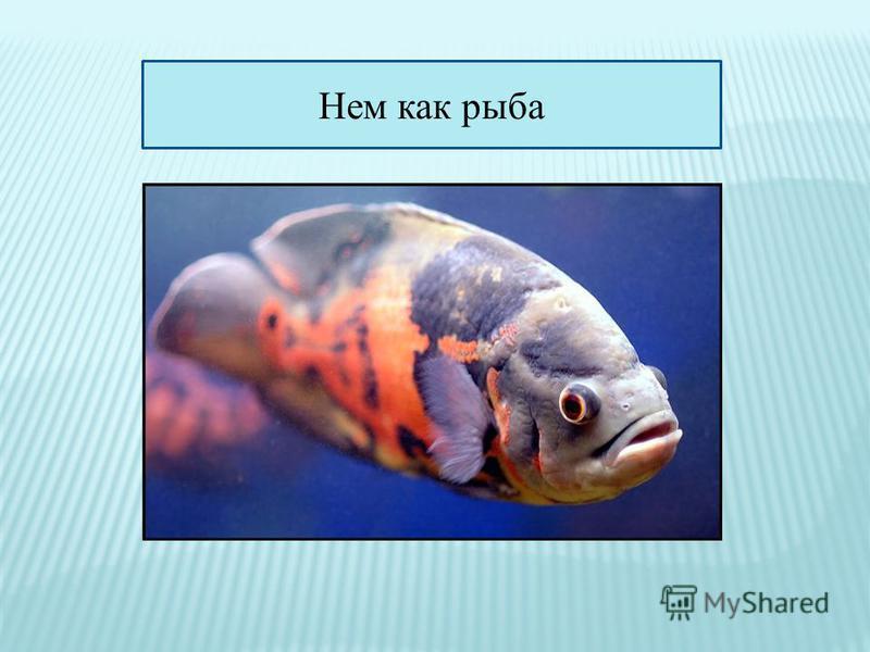 Нем как рыба