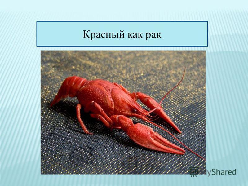 Красный как рак