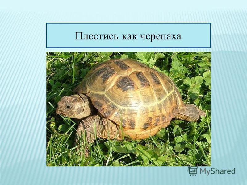 Плестись как черепаха