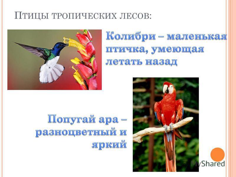 П ТИЦЫ ТРОПИЧЕСКИХ ЛЕСОВ :