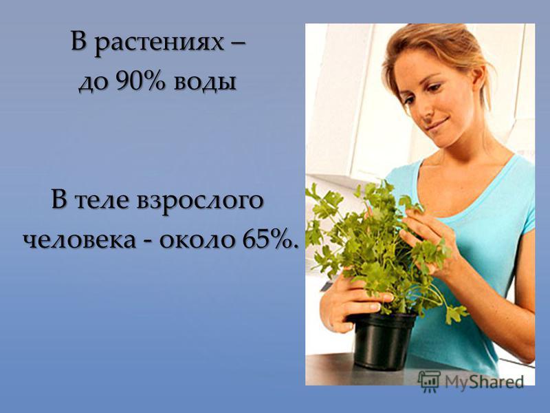 В растениях – до 90% воды В теле взрослого человека - около 65%. человека - около 65%.