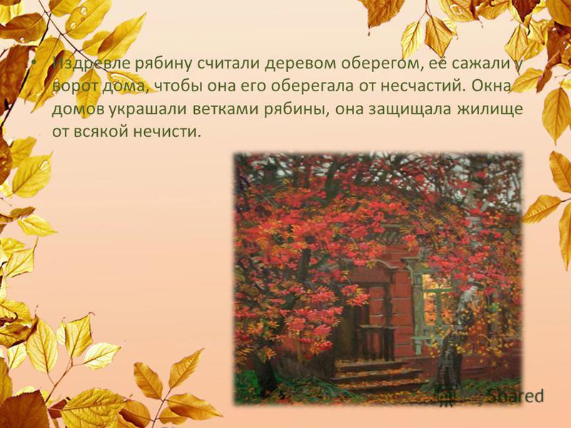 Издревле рябину считали деревом оберегом, её сажали у ворот дома, чтобы она его оберегала от несчастий. Окна домов украшали ветками рябины, она защищала жилище от всякой нечисти.