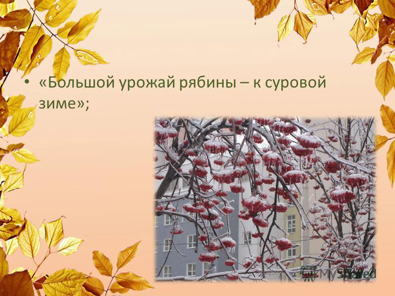«Большой урожай рябины – к суровой зиме»;