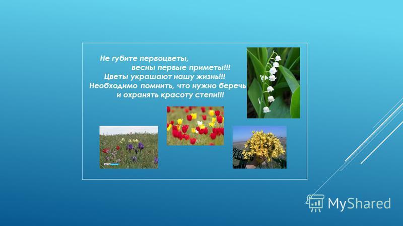 Не губите первоцветы, весны первые приметы!!! Цветы украшают нашу жизнь!!! Необходимо помнить, что нужно беречь и охранять красоту степи!!!