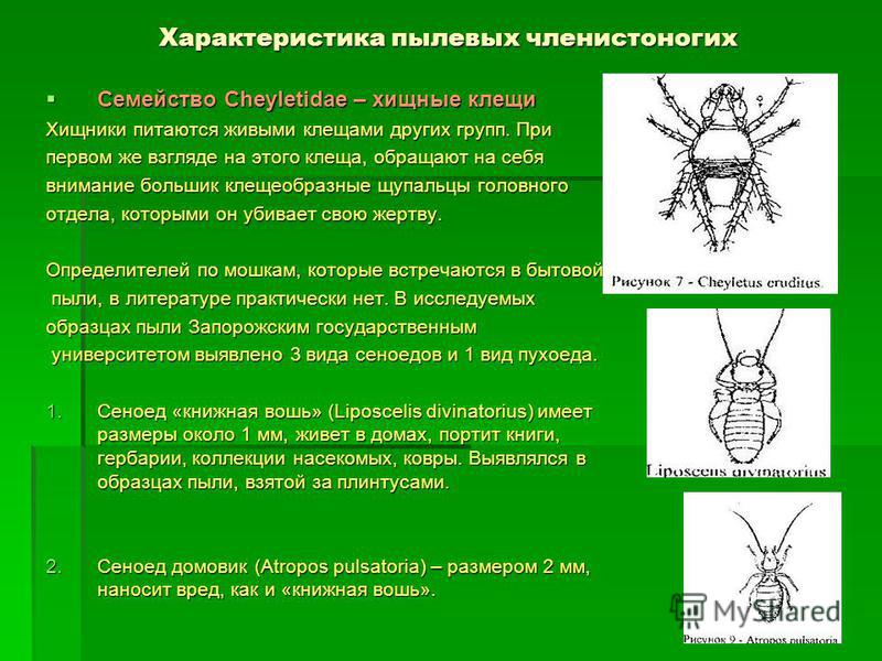 Характеристика пылевых членистоногих Семейство Cheyletidae – хищные клещи Семейство Cheyletidae – хищные клещи Хищники питаются живыми клещами других групп. При первом же взгляде на этого клеща, обращают на себя внимание большик клещеобразные щупальц