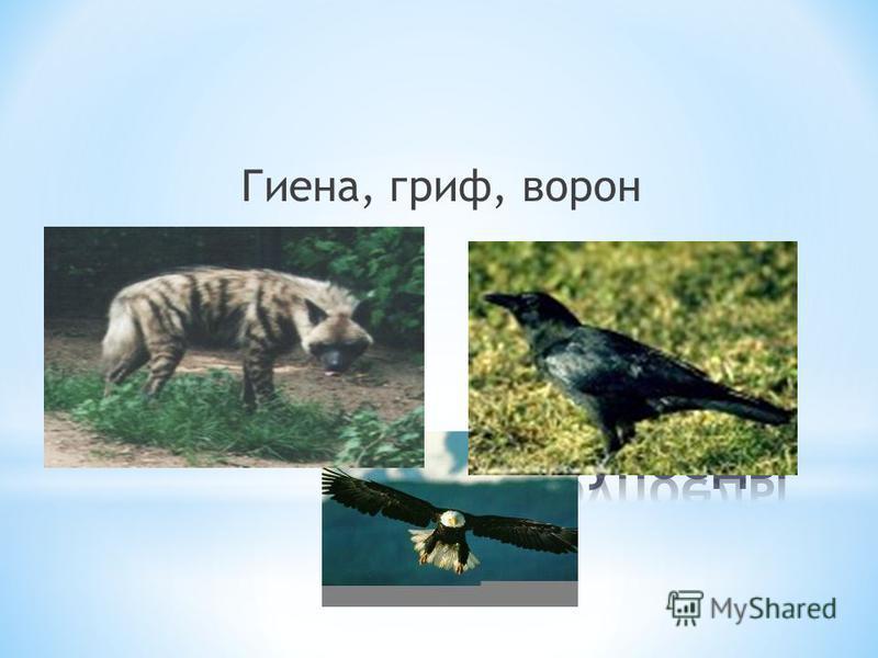 Гиена, гриф, ворон