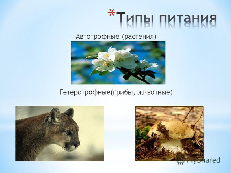Автотрофные (растения) Гетеротрофные(грибы, животные)