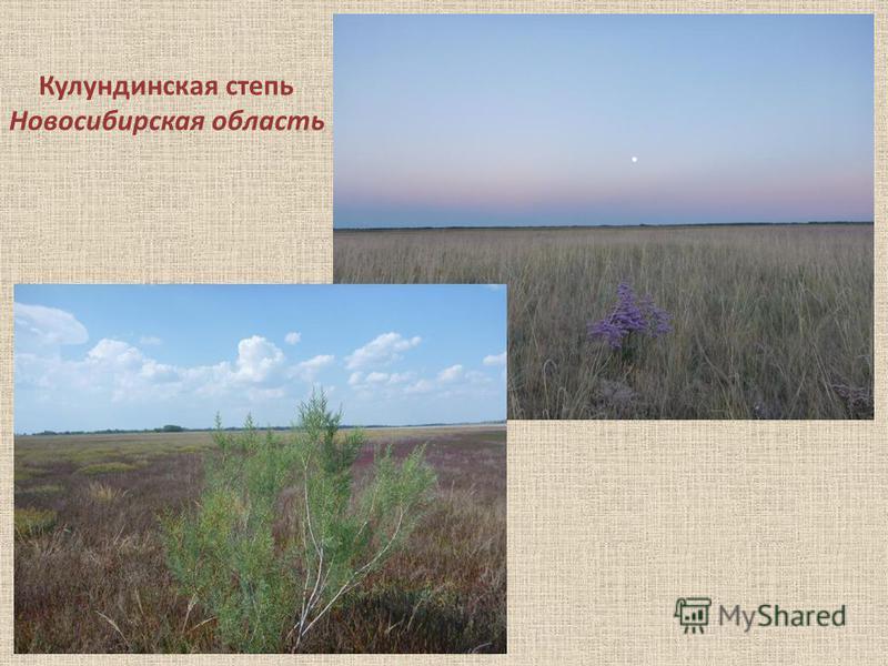 Кулундинская степь Новосибирская область