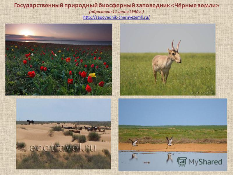 Государственный природный биосферный заповедник «Чёрные земли» (образован 11 июня 1990 г.) http://zapovednik-chernyezemli.ru/