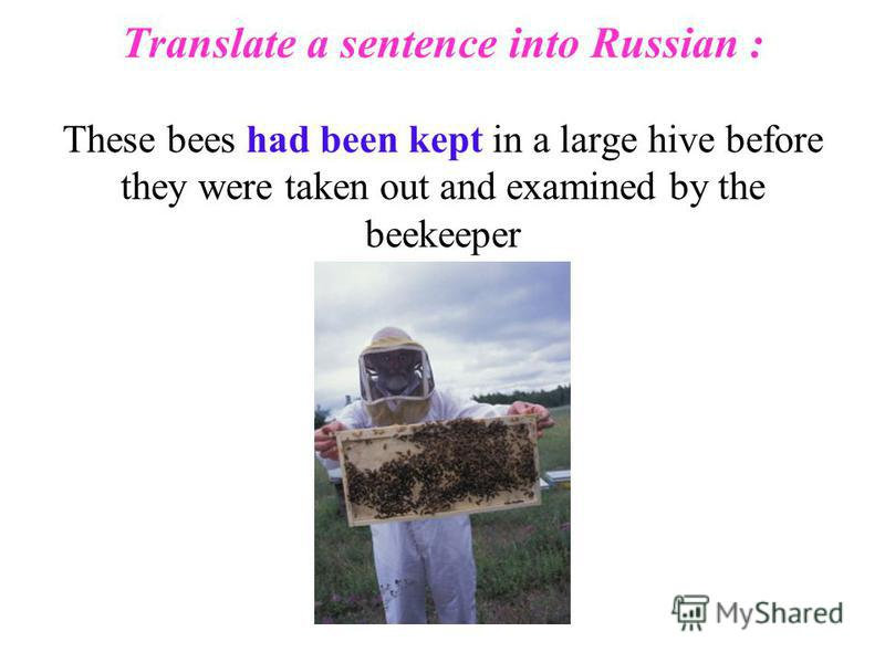 Translate a sentence into Russian : These bees had been kept in a large hive before they were taken out and examined by the beekeeper