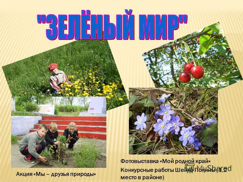 Фотовыставка «Мой родной край» Конкурсные работы Шейко Полины (1,2 место в районе) Акция «Мы – друзья природы»