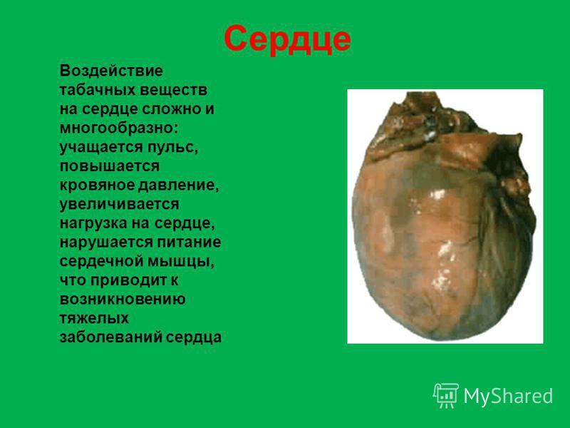 Воздействие табачных веществ на сердце сложно и многообразно: учащается пульс, повышается кровяное давление, увеличивается нагрузка на сердце, нарушается питание сердечной мышцы, что приводит к возникновению тяжелых заболеваний сердца Сердце