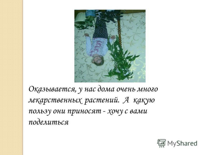 Оказывается, у нас дома очень много лекарственных растений. А какую пользу они приносят - хочу с вами поделиться