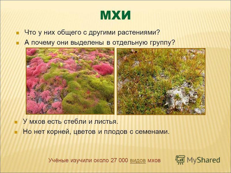 МХИ Что у них общего с другими растениями? А почему они выделены в отдельную группу? У мхов есть стебли и листья. Но нет корней, цветов и плодов с семенами. Учёные изучили около 27 000 в в в в в инии ддт ооо вввв мхов