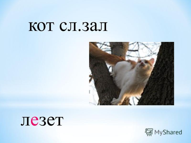 кот сл.зал лезет
