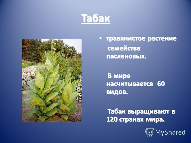 Табак травянистое растение травянистое растение семейства пасленовых. семейства пасленовых. В мире насчитывается 60 видов. В мире насчитывается 60 видов. Табак выращивают в 120 странах мира. Табак выращивают в 120 странах мира.