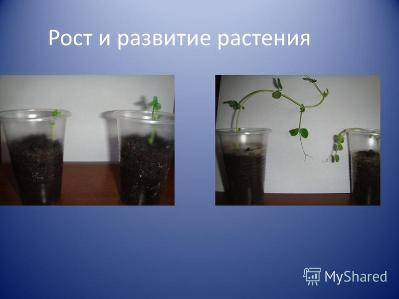 Рост и развитие растения