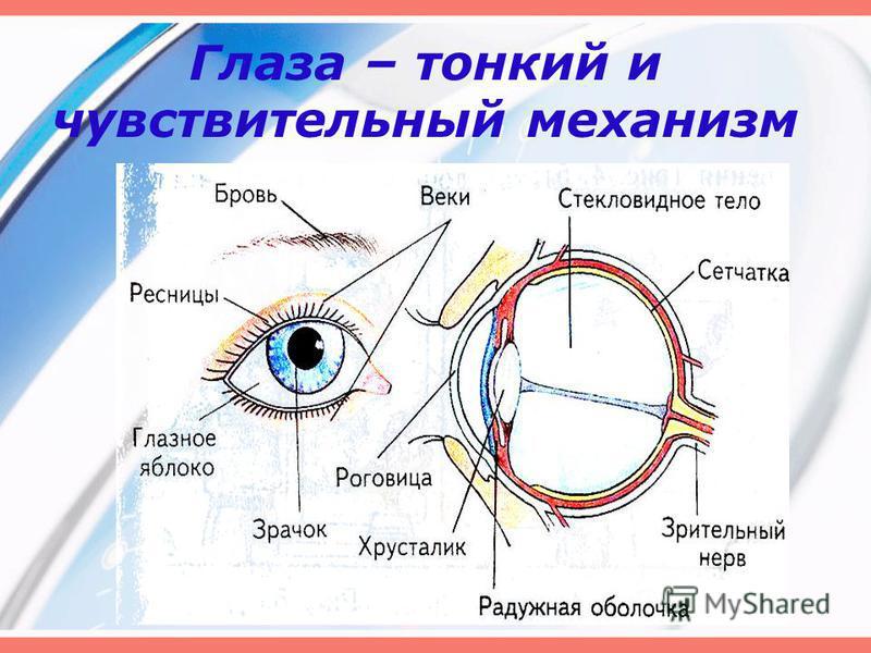 Глаза – тонкий и чувствительный механизм