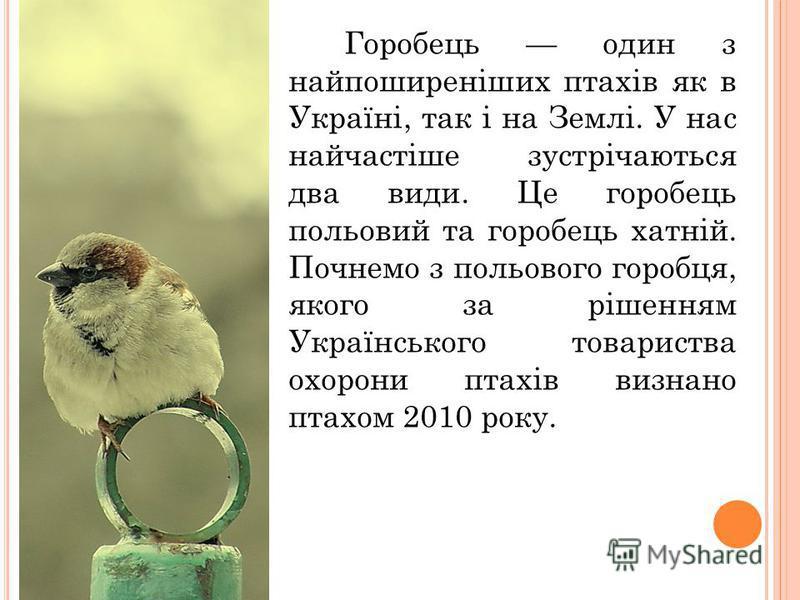 Горобець один з найпоширеніших птахів як в Україні, так і на Землі. У нас найчастіше зустрічаються два види. Це горобець польовий та горобець хатній. Почнемо з польового горобця, якого за рішенням Українського товариства охорони птахів визнано птахом