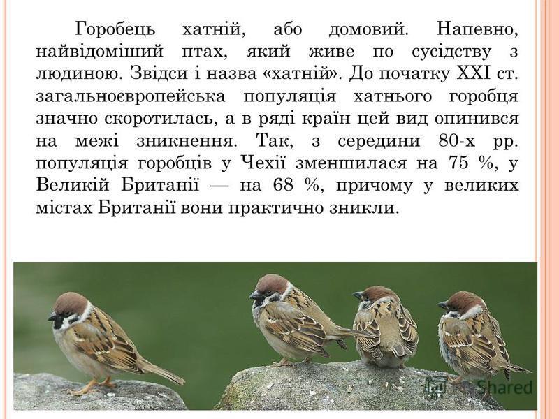 Горобець хатній, або домовий. Напевно, найвідоміший птах, який живе по сусідству з людиною. Звідси і назва «хатній». До початку XXІ ст. загальноєвропейська популяція хатнього горобця значно скоротилась, а в ряді країн цей вид опинився на межі зникнен