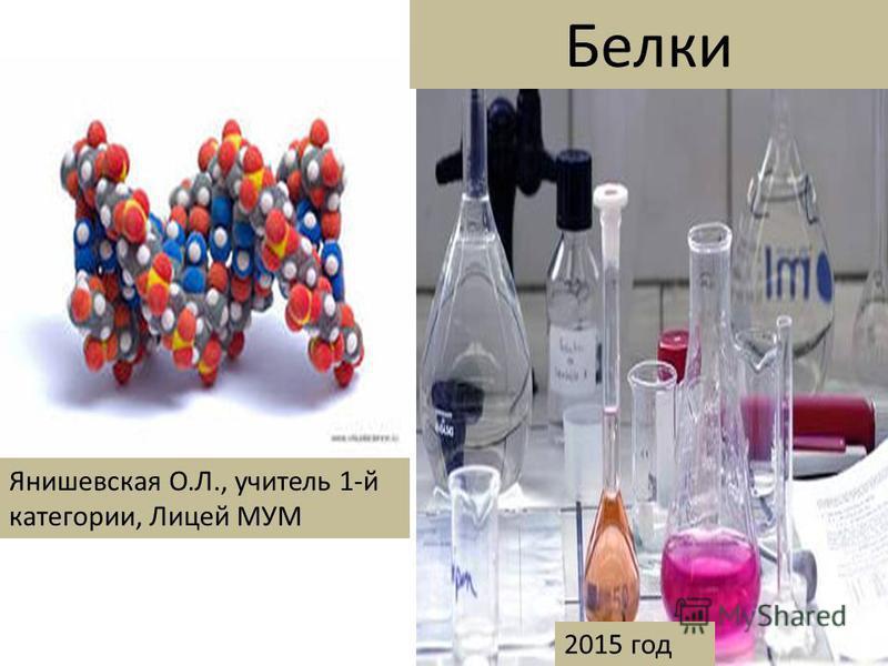 Белки Янишевская О.Л., учитель 1-й категории, Лицей МУМ 2015 год