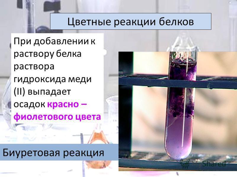 Цветнае реакции белков Биуретовая реакция При добавлении к раствору белка раствора гидроксида меди (II) выпадает осадок красно – фиолетового цвета