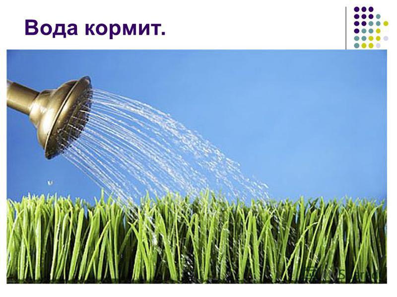 Вода кормит.