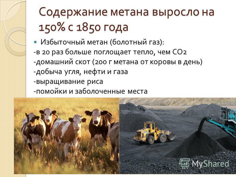 Содержание метана выросло на 150% с 1850 года Избыточный метан ( болотный газ ): - в 20 раз больше поглощает тепло, чем СО 2 - домашний скот (200 г метана от коровы в день ) - добыча угля, нефти и газа - выращивание риса - помойки и заболоченные мест