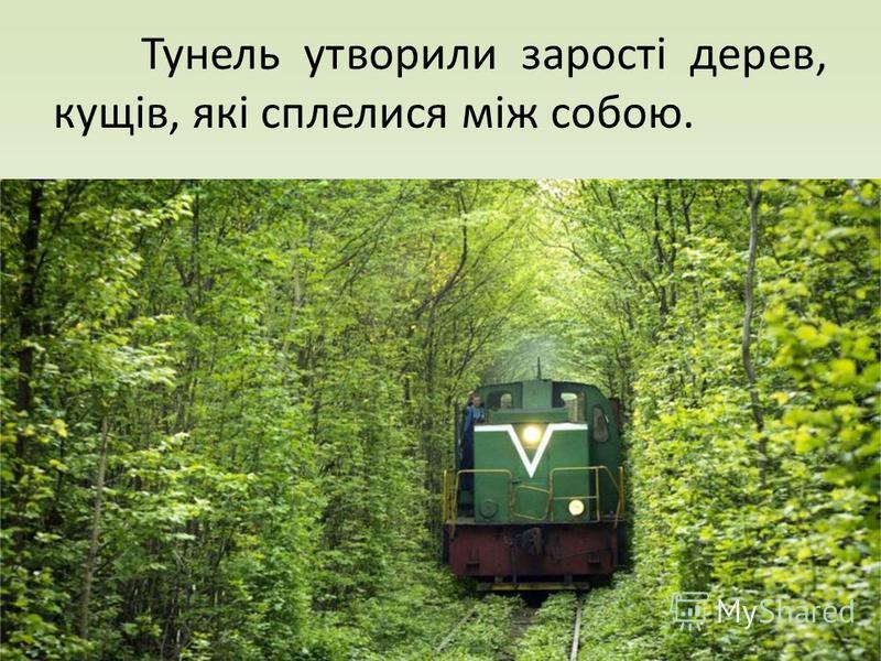 Тунель утворили зарості дерев, кущів, які сплелися між собою.