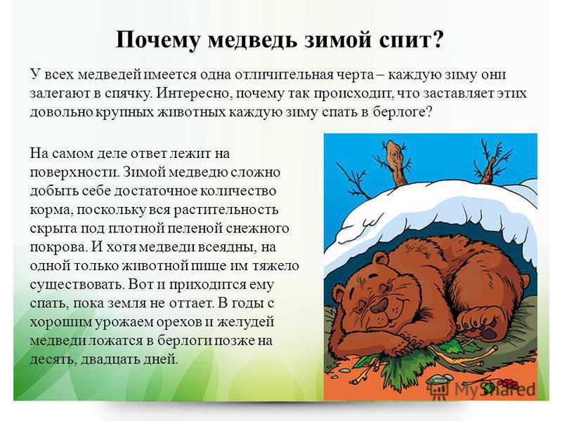 Почему медведь зимой спит? У всех медведей имеется одна отличительная черта – каждую зиму они залегают в спячку. Интересно, почему так происходит, что заставляет этих довольно крупных животных каждую зиму спать в берлоге? На самом деле ответ лежит на