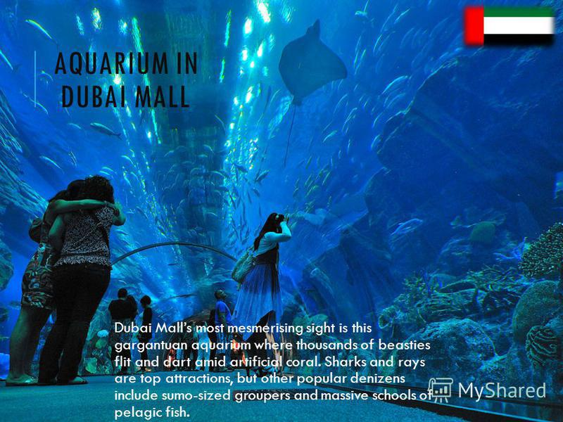 AQUARIUM IN DUBAI MALL Dubai Malls most mesmerising sight is this gargantuan aquarium where thousands of beasties flit and dart amid artificial coral. Sharks and rays are top attractions, but other popular denizens include sumo-sized groupers and mas
