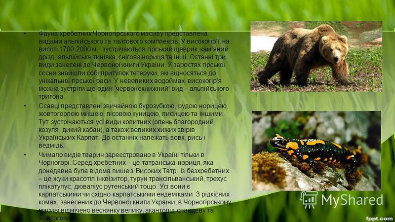 Фауна хребетних Чорногірського масиву представлена видами альпійського та тайгового комплексів. У високогірї, на висоті 1700-2000 м, зустрічаються гірський щеврик, камяний дрізд, альпійська тинівка, снігова нориця та інші. Останні три види занесені д