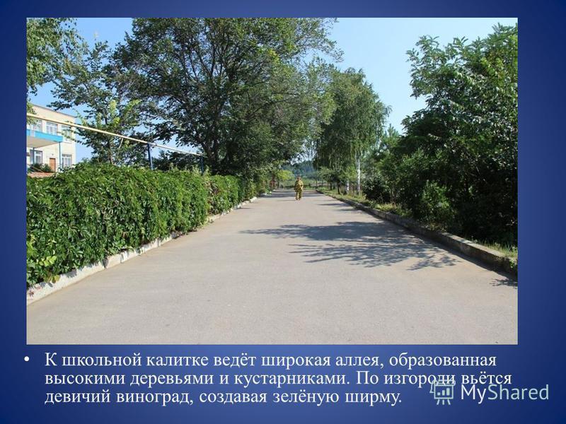 К школьной калитке ведёт широкая аллея, образованная высокими деревьями и кустарниками. По изгороди вьётся девичий виноград, создавая зелёную ширму.