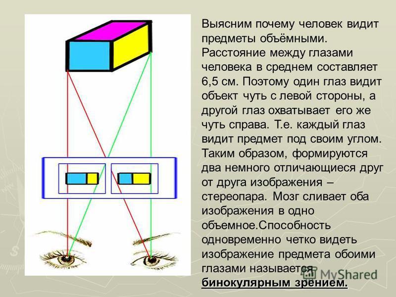 бинокулярным зрением. Выясним почему человек видит предметы объёмными. Расстояние между глазами человека в среднем составляет 6,5 см. Поэтому один глаз видит объект чуть с левой стороны, а другой глаз охватывает его же чуть справа. Т.е. каждый глаз в