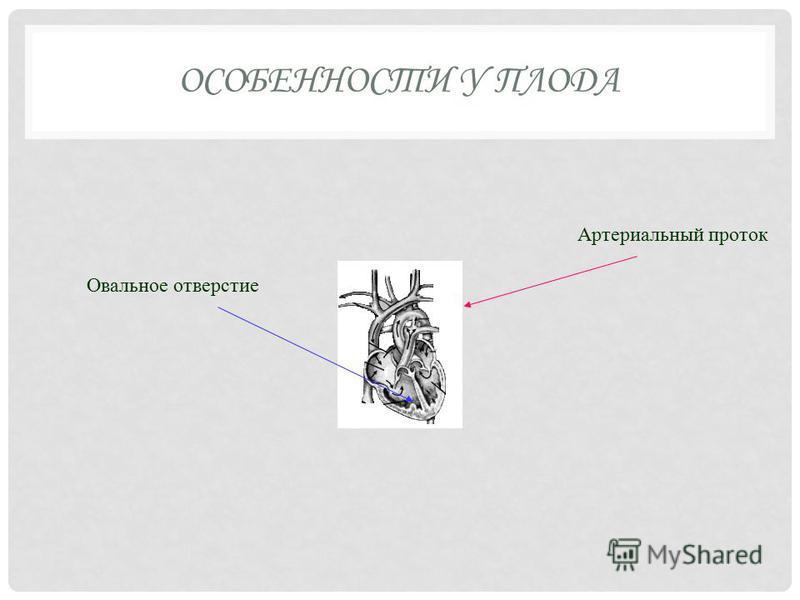 ОСОБЕННОСТИ У ПЛОДА Артериальный проток Овальное отверстие