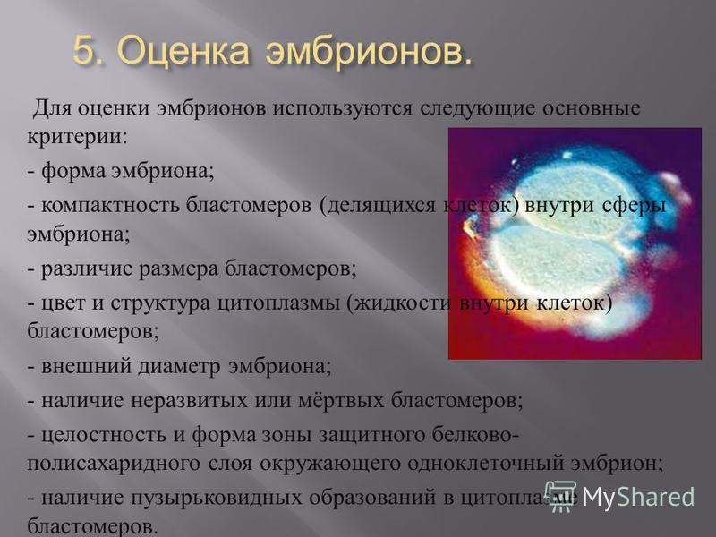 5. Оценка эмбрионов. Для оценки эмбрионов используются следующие основные критерии : - форма эмбриона ; - компактность бластомеров ( делящихся клеток ) внутри сферы эмбриона ; - различие размера бластомеров ; - цвет и структура цитоплазмы ( жидкости