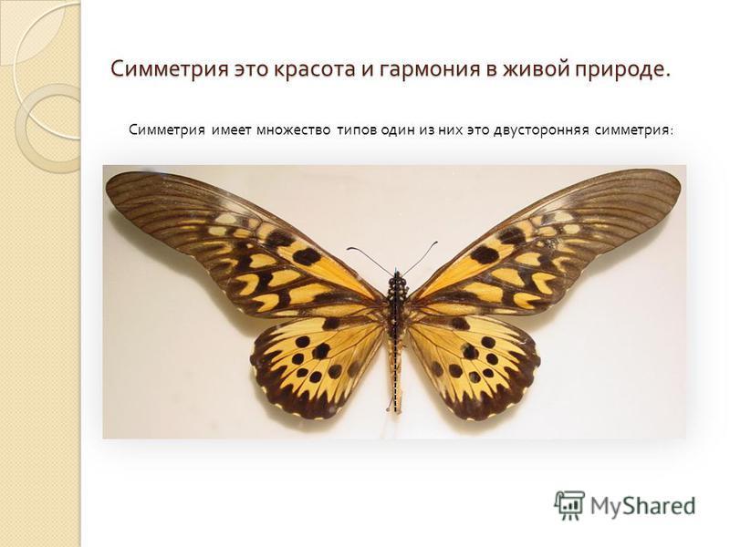 Симметрия это красота и гармония в живой природе. Симметрия имеет множество типов один из них это двусторонняя симметрия :