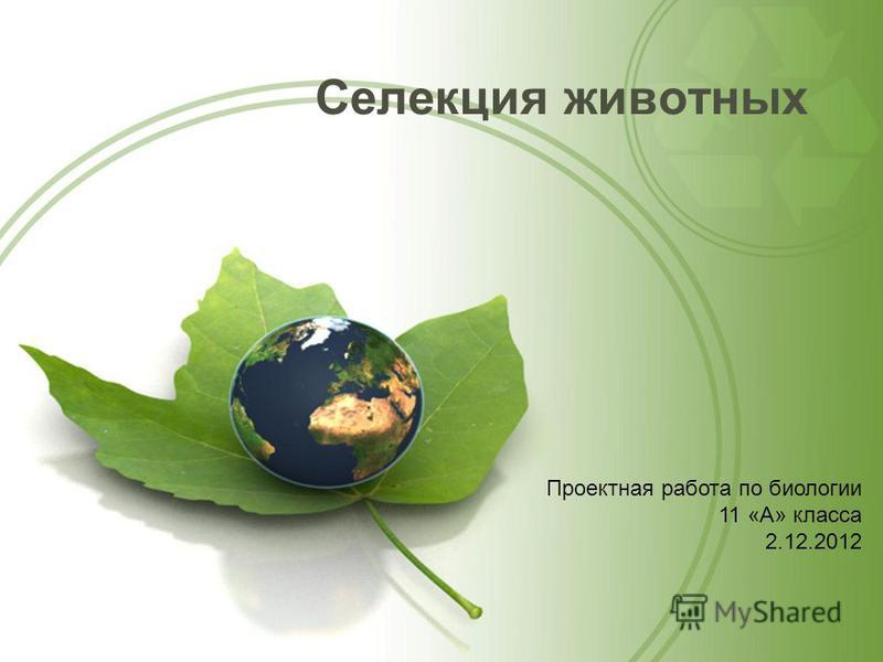 Селеакция животных Проектная работа по биологии 11 «А» класса 2.12.2012