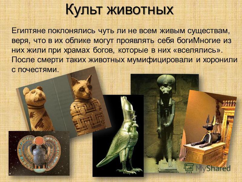 Культ животных Египтяне поклонялись чуть ли не всем живым существам, веря, что в их облике могут проявлять себя боги Многие из них жили при храмах богов, которые в них «вселялись». После смерти таких животных мумифицировали и хоронили с почестями.