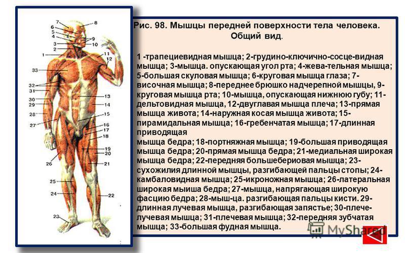 Рис. 98. Мышцы передней поверхности тела человека. Общий вид. 1 -трапециевидная мышца; 2-грудино-ключично-сосце-видная мышца; 3-мышца. опускающая угол рта; 4-жева-тельная мышца; 5-большая скуловая мышца; 6-круговая мышца глаза; 7- височная мышца; 8-п