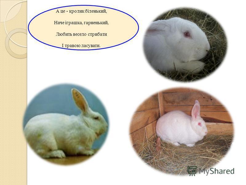 МЕЛЕШКО ДЕНИС Кролю-Кролику, хороший, Чом так вушка нашорошив? Поглядаєш трохи скоса І тривожно водиш носом.
