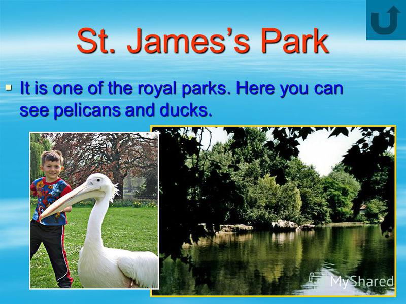 St. Jamess Park It is one of the royal parks. Here you can see pelicans and ducks. It is one of the royal parks. Here you can see pelicans and ducks.