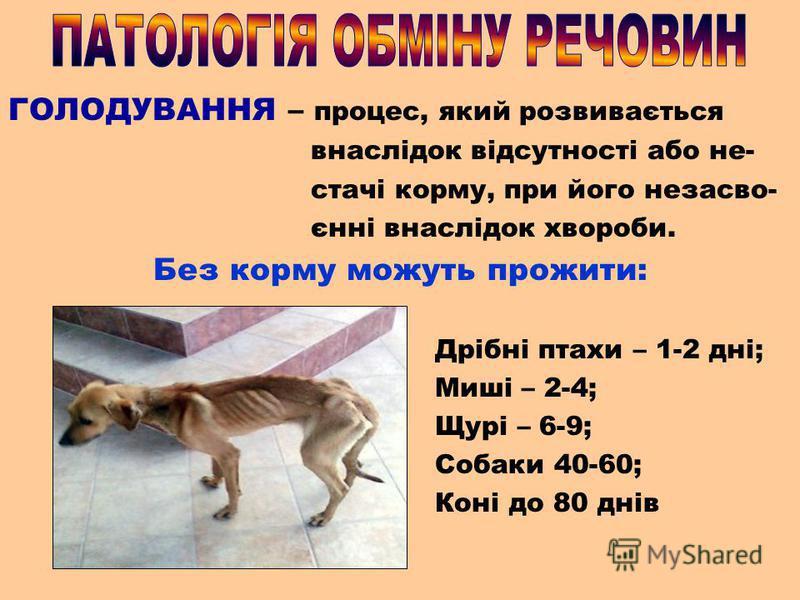 ГОЛОДУВАННЯ – процес, який розвивається внаслідок відсутності або не- стачі корму, при його незасво- єнні внаслідок хвороби. Без корму можуть прожити: Дрібні птахи – 1-2 дні; Миші – 2-4; Щурі – 6-9; Собаки 40-60; Коні до 80 днів